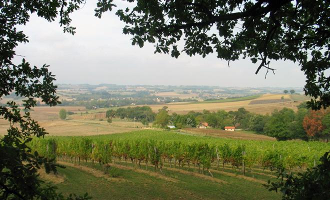Виноградники провинции Арманьяк